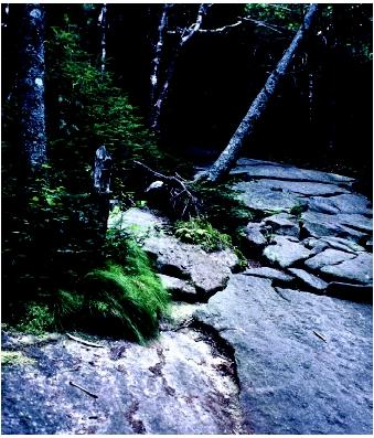 Soil erosion on a trail in the Adirondack mountains. Erosion is a geologic mechanism that helps to move chemical compounds between biotic and abiotic forms in the environment.