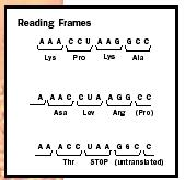 how to write codons anticodons