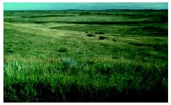 A Montana grassland. Temperate grasslands—also known as prairies—have cold winters and warm to hot summers.
