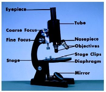 The Compound Light Microscope - College of Arts  Science :: Miami
