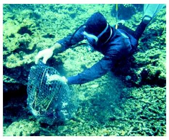 A marine biologist inspecting a coral reef in Indonesia that has been damaged by illegal fishing practices.