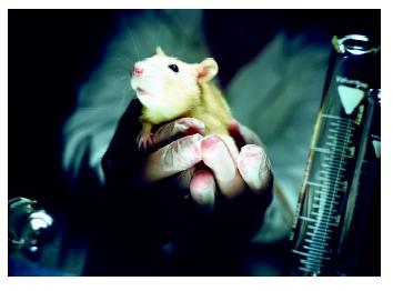 Mice have helped in developing treatments for seizures, multiple sclerosis, AIDS, and rejection of organ transplants.