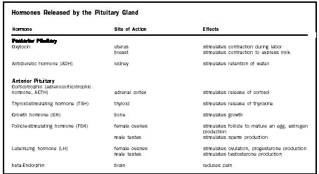 Glands Hormones And Functions Chart Endocrine System
