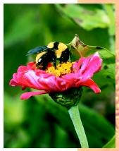 Some insect groups, such as bees, originated after flowering plants, their members developing mouthpart structures and behavior specialized for pollination.