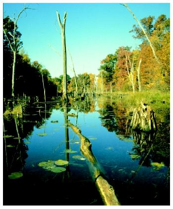 Wetlands are important and valuable natural resources.