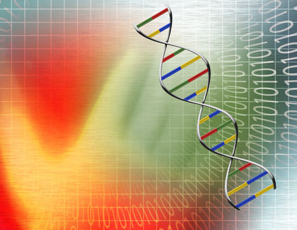 The unit of genetic organization in all living organisms in the chromosome.?