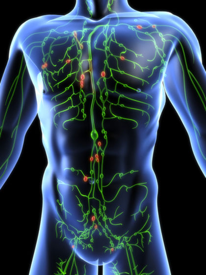 Lymphatic System 3892