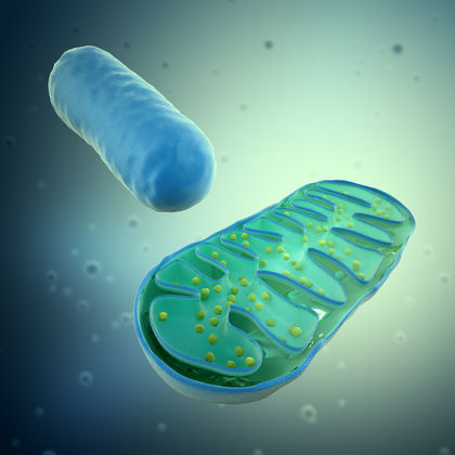 Membrane Transport - Biology Encyclopedia - cells, body, human ...